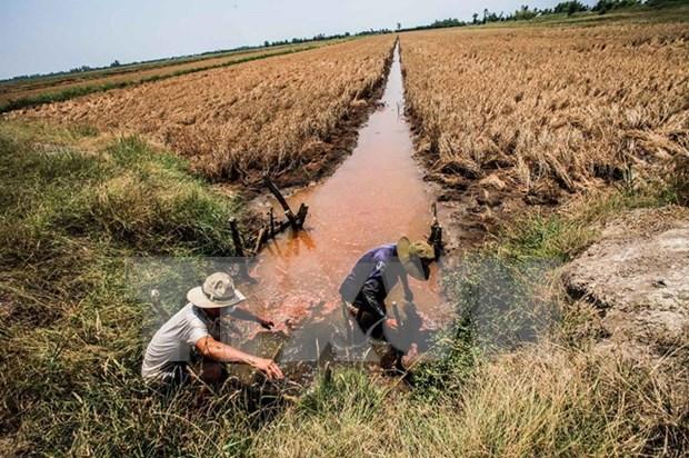 Agricultura del delta Mekong podria desaparecer por salinizacion hinh anh 1