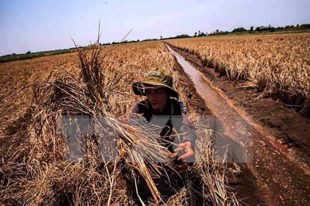 Elaboran guiones para enfrentar salinizacion en Delta de Mekong hinh anh 1