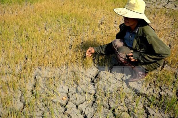 Cambio de estructura de cultivo en Vietnam: solucion para sequia hinh anh 1