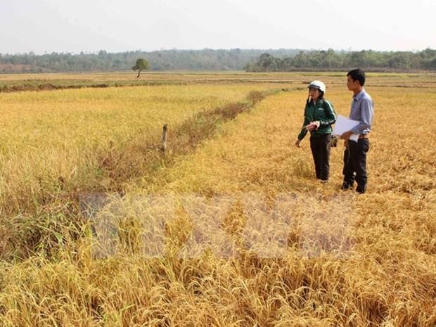 Disena Vietnam esquema para enfrentar el cambio climatico hinh anh 1