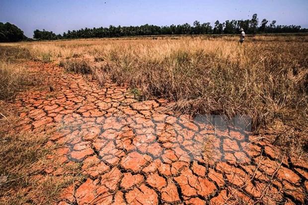 Sequia y salinizacion seguiran afectando a Vietnam en abril hinh anh 1