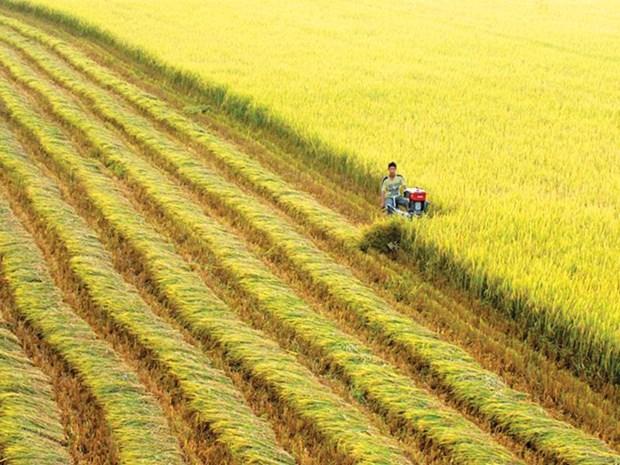 Banco Mundial financia plan de agricultura sostenible en Vietnam hinh anh 1