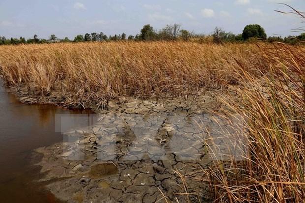 Grave sequia y salinizacion afecta seriamente a Delta del Mekong hinh anh 1