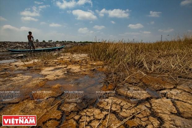 Delta del Mekong hace frente a sequia y salinizacion hinh anh 1