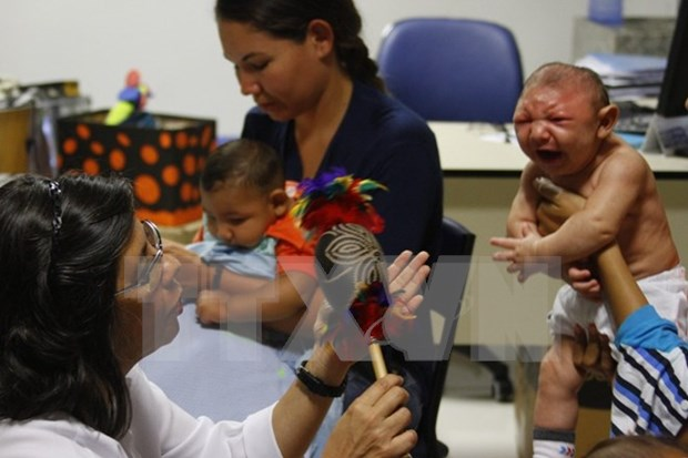 Zika causa microcefalia, segun expertos estadounidenses hinh anh 1