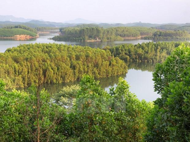 Plantacion forestal brinda felicidad y prosperidad para pobladores de Yen Bai hinh anh 1