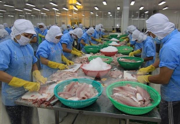 Urgen a reanudar exportacion de bagres de 13 empresas vietnamitas a EE.UU. hinh anh 1