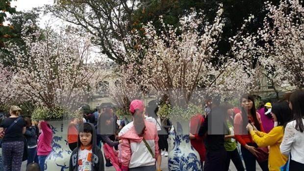 Primer festival de flor de cerezo en Dong Nai hinh anh 1