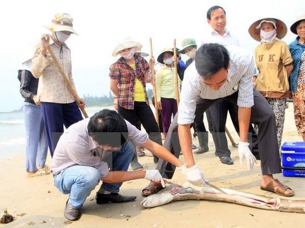 Muerte masiva de peces en costa central: Premier exige asistencia a pescadores hinh anh 1