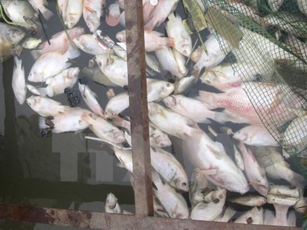 Prohiben comercio y consumo de productos maritimos muertos por causas inusuales hinh anh 1
