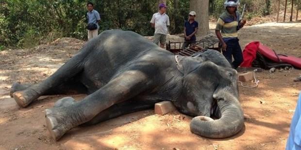 Camboya refuerza medidas contra la sequia hinh anh 1