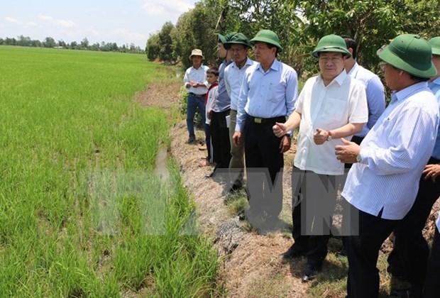 Aceleran proyecto agricola del Banco Mundial en Vietnam hinh anh 1