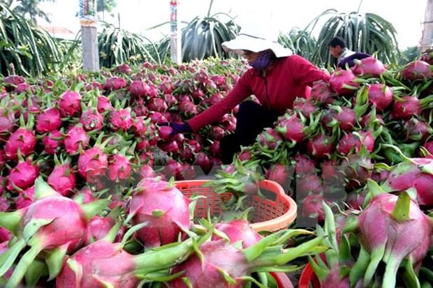 Exportacion de frutas vietnamitas preve alcanzar mas de dos mil millones USD hinh anh 1