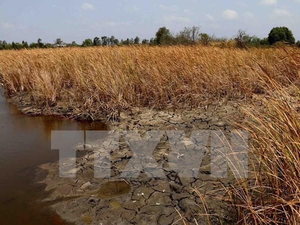 Vietnam debe tomar riendas en la gestion de riesgos de desastres hinh anh 1