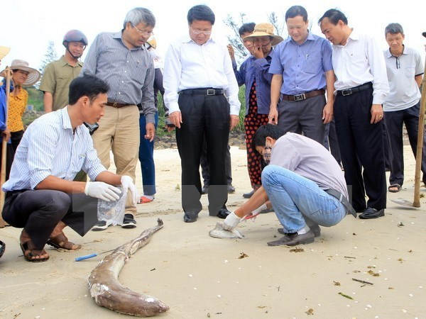 Vietnam aclarara pronto causas de muerte masiva de peces en costa central hinh anh 1