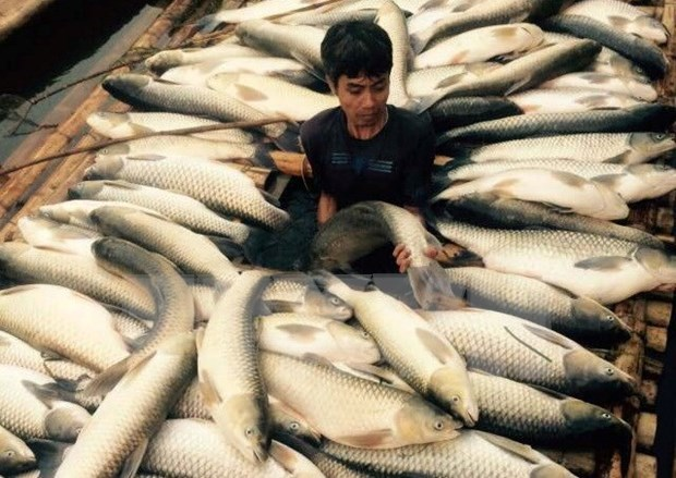 """Fuerza terrorista incita disturbios en Vietnam bajo mascara de """"ambientalista"""" hinh anh 1"""