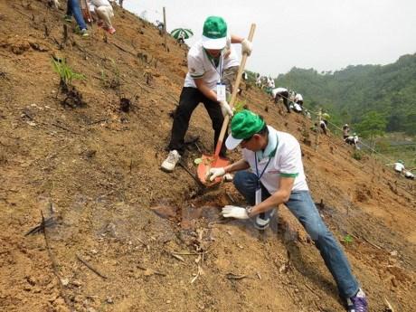 Honda – Vietnam siembra 80 hectareas de bosque en Bac Kan hinh anh 1