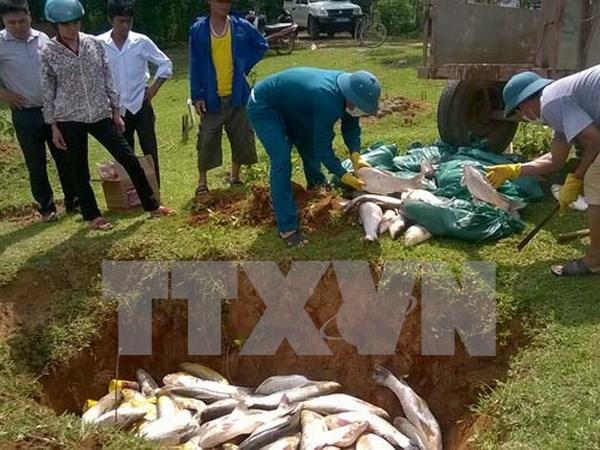 Atribuyen muerte de peces en Binh Thuan a falta de oxigeno hinh anh 1