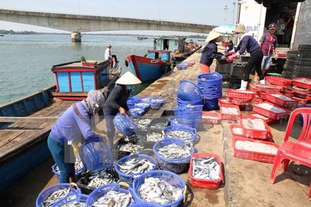 Provincia vietnamita auxilia a pescadores afectados por incidente ambiental hinh anh 1