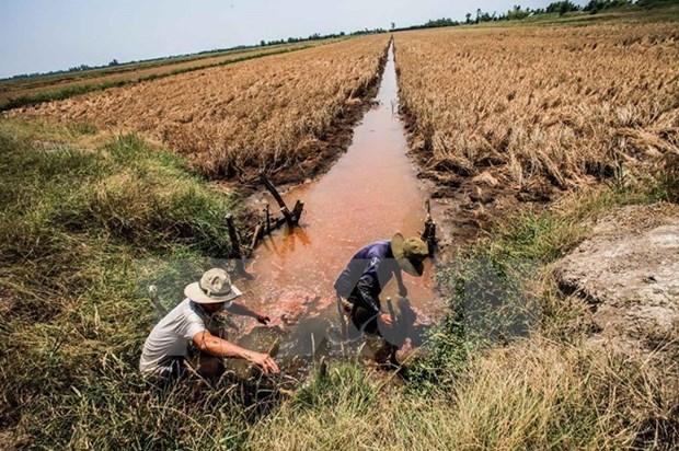 Cruz Roja de Vietnam ofrece asistencia urgente a pobladores afectados por sequia hinh anh 1