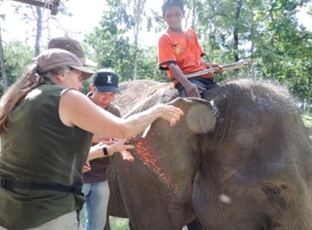 Efectuan programa de proteccion de elefantes en Vietnam hinh anh 1