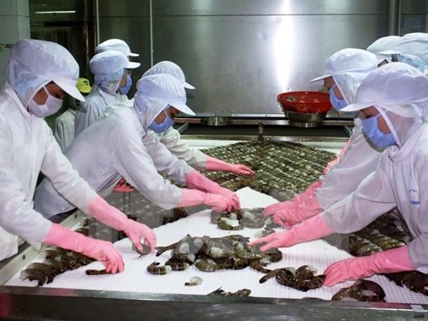 UE apoya el desarrollo de cadenas de valor de camarones en Vietnam hinh anh 1