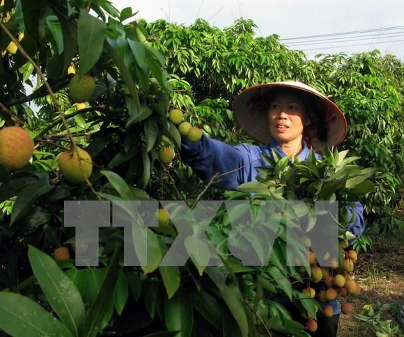 Destacan en Vietnam rol de Pymes a cadenas de suministro de alimentos hinh anh 1
