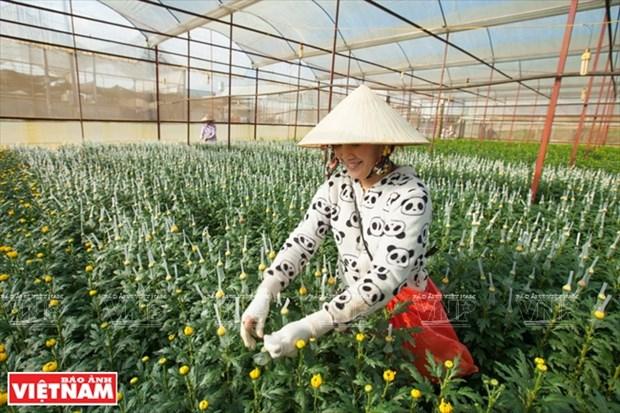 Da Lat, reino de hortalizas y flores hinh anh 1