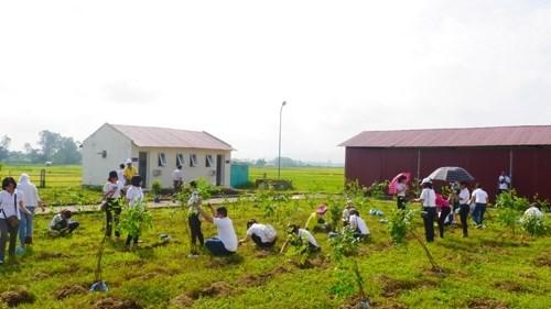 Plantan miles de arboles para un Vietnam mas verde hinh anh 1