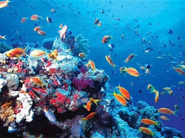 Requieren plan maestro para conservacion de biodiversidad marina en Vietnam hinh anh 1