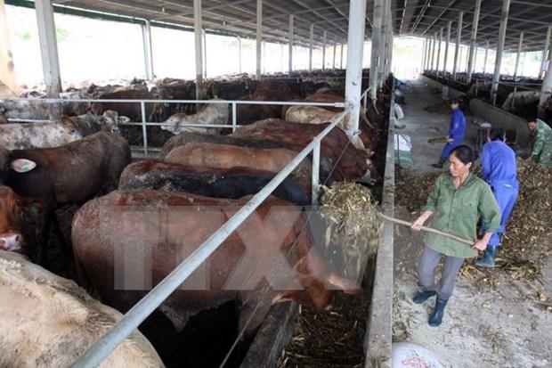 Empresas japoneses interesadas en agricultura vietnamita hinh anh 1