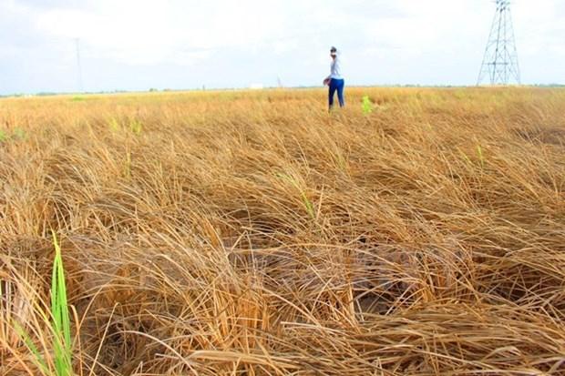 Banco Mundial ayuda a Vietnam elevar resistencia ante cambio climatico hinh anh 1