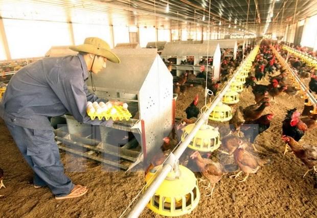 Reconocen contribuciones de ONUDI a desarrollo agricola en Vietnam hinh anh 1
