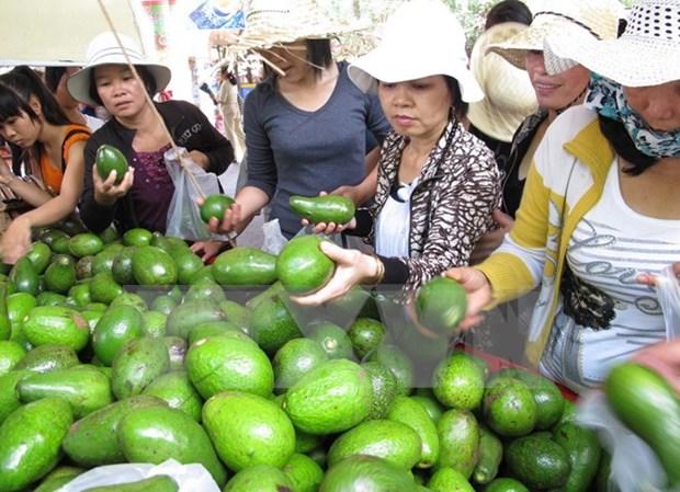 Seminario aborda maneras de construir marcas comerciales para productos agricolas vi hinh anh 1