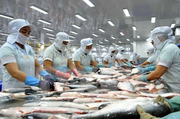 Vietnam alcanza monto millonario por exportaciones de pescado Tra hinh anh 1