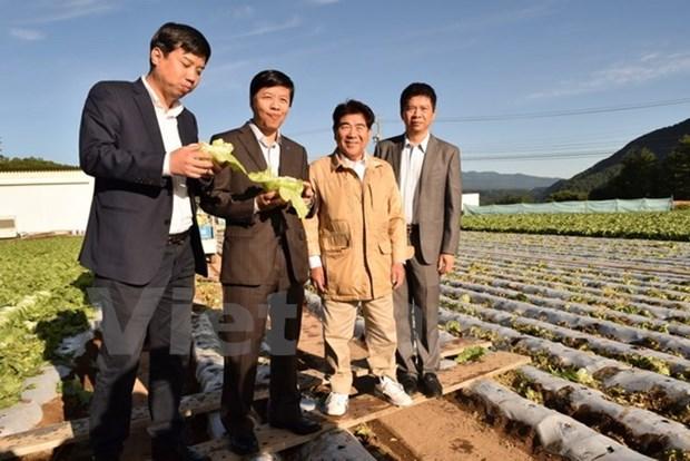 Vietnam adquiere experiencias agricolas de Japon hinh anh 1