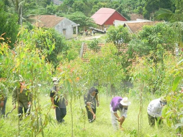 Provincia vietnamita anuncia Plan de Accion contra degradacion forestal hinh anh 1