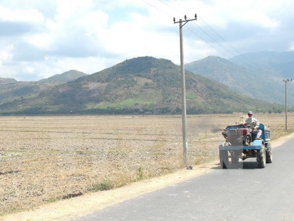 EE.UU. anade 500 mil dolares de ayuda a zonas afectadas por sequia en Vietnam hinh anh 1