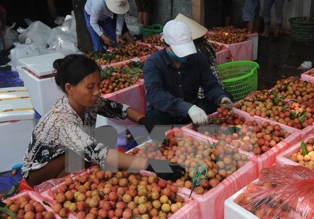 Incrementa Vietnam exportaciones de lichis a Australia hinh anh 1