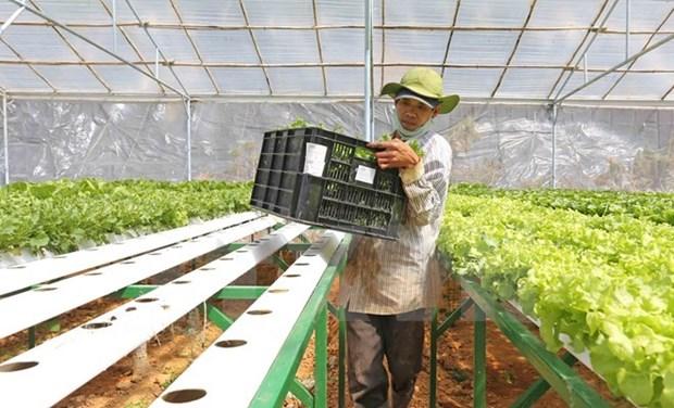 Provincia norvietnamita exhorta inversiones japonesas en agricultura moderna hinh anh 1