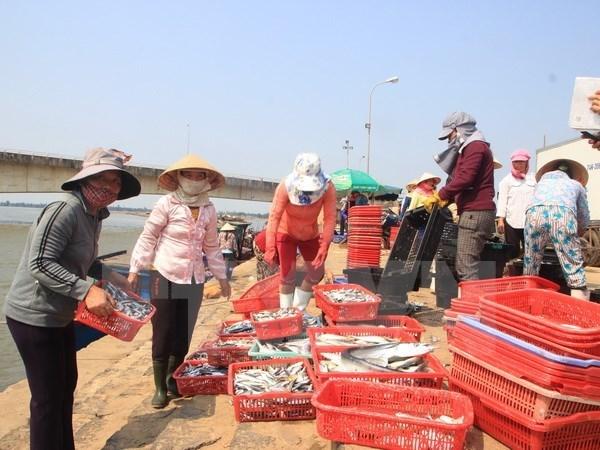 Quang Tri dedica esfuerzos por estabilizar la vida de pescadores locales hinh anh 1