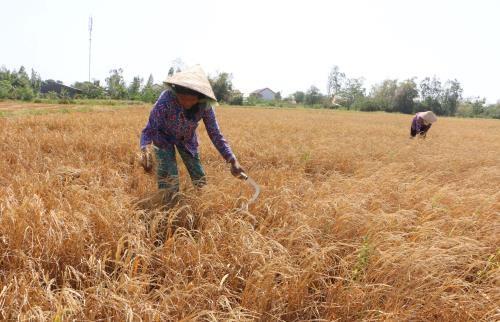 Cambio climatico, gran reto para desarrollo sostenible de Delta de rio Mekong hinh anh 1