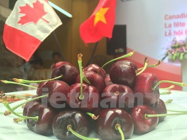 Promueve Canada exportaciones de cereza en Vietnam hinh anh 1