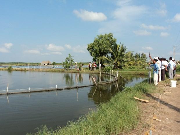 Refuerza Kien Giang cumplir meta anual de exportaciones hinh anh 1