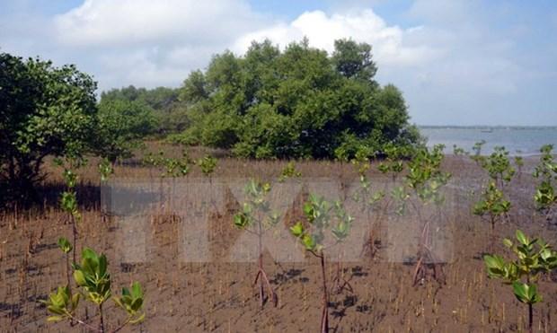 Despliegan proyecto de reforestacion de manglares en Vietnam hinh anh 1