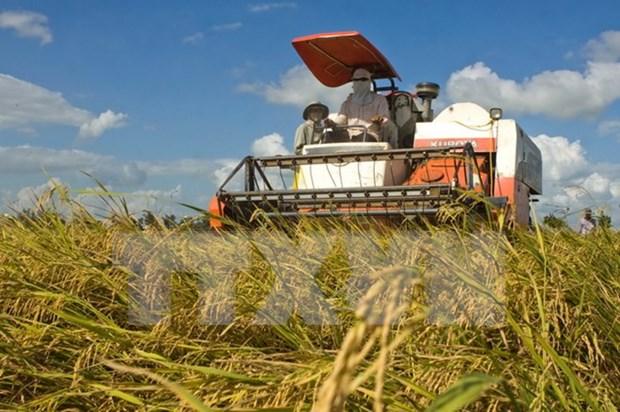 Pronostican reduccion de exportaciones vietnamitas del arroz hinh anh 1