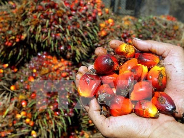 Superavit comercial de Indonesia aumenta en 2,4 veces hinh anh 1