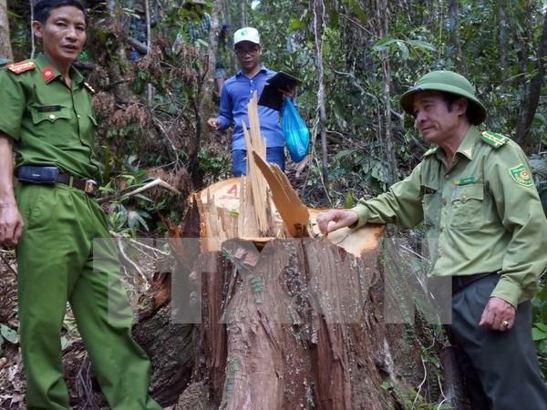 Cierre de bosques naturales en altiplanicie occidental de Vietnam hinh anh 1