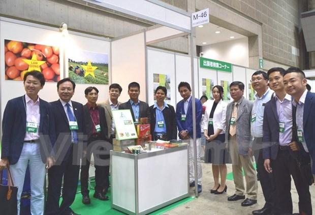 Estudian empresas vietnamitas mercado japones hinh anh 1