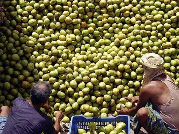 Vietnam exporta mangos de alta calidad a Australia hinh anh 1